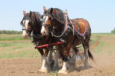 Tri-State Horse & Mule Sale 05.03.14 Results