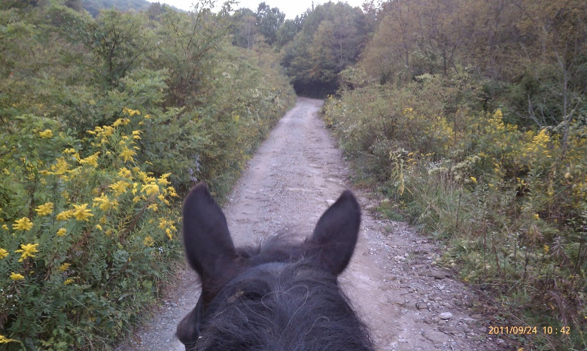 Complete Guide to Horse Trail Riding